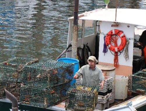 How Blockchain is Transforming Seafood industry
